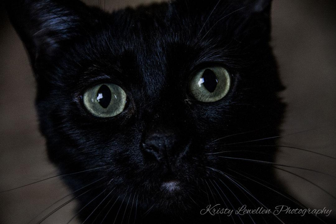 Zoe Kitty